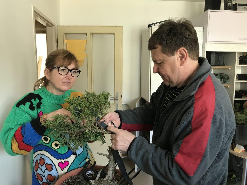Stretnutie bonsaistov u Petra Rošku v Sobotišti 14.04.2019
