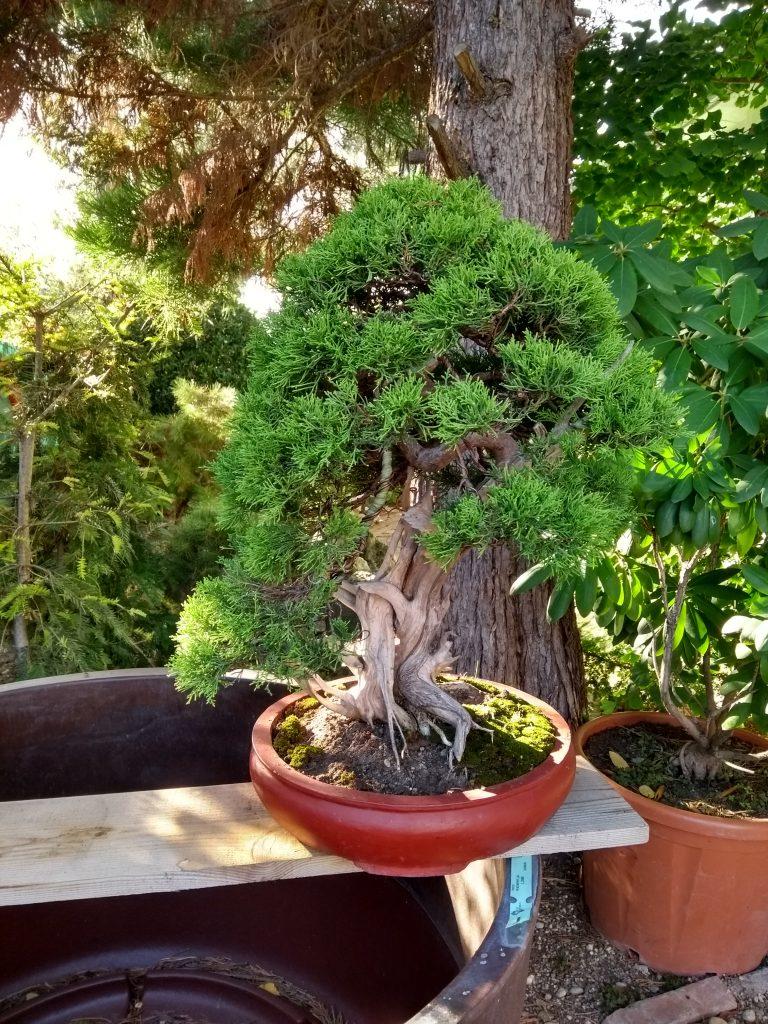 Galéria bonsajov – Ján Brinza