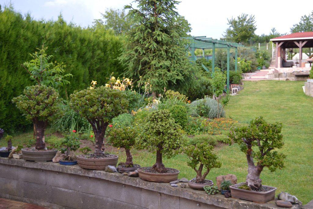 Stretnutie bonsaistov u Vyhlídalovcov Bojničky 26. mája 2014