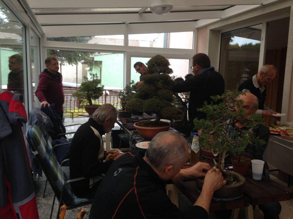 Stretnutie bonsaistov v Hlohovci u Jana Vidličku. 22. októbra 2018