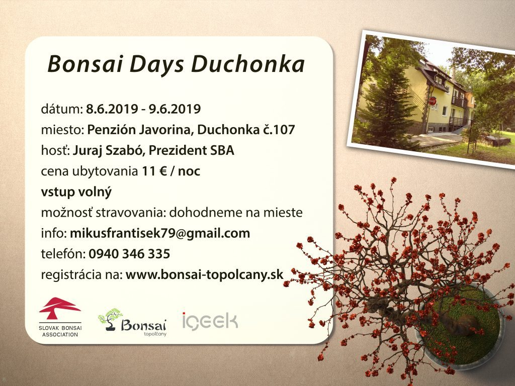 Bonsajové dni Duchonka